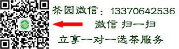 日照绿茶直销网