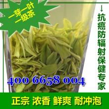 日照绿茶春茶精品